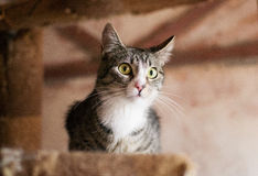 Gestreifte Katze Lizenzfreies Stockbild