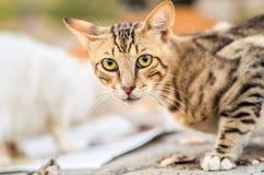 Gestreifte Katze Stockfoto