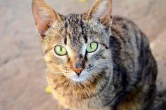 Gestreifte Katze Stockfotografie