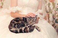 Gestreifte Katze in den Händen an der Braut lizenzfreie stockfotografie