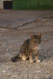Gestreifte Katze mit grünen Augen Stockbilder