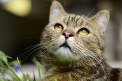 Gestreifte Katze - Porträt Lizenzfreie Stockfotos