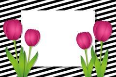 Gestreifte Schwarzweiss-Karte mit rosa Tulpen stock abbildung