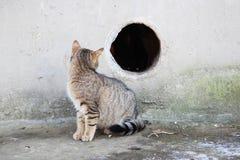 gestreifte Streukatze, die das Loch betrachtet, das das zu den Keller eines Hauses führt es gibt eine weitere Katze Stockfoto