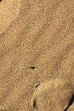 Gestreifter Käfer auf Sand Stockbild
