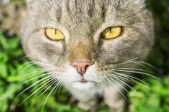 Gestreifter Stand der Katze auf grünem Gras in summer7103 stockfotos