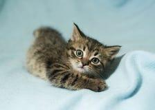 Gestreiftes erschrockenes Kätzchen fiel Stockfoto