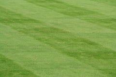 Gestreiftes Gras Stockfoto