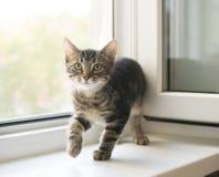 Gestreiftes Kätzchen Lizenzfreie Stockbilder