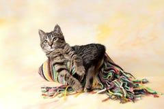 Gestreiftes Kätzchen, das auf dem Schal liegt Lizenzfreies Stockbild