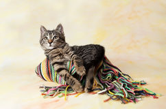 Gestreiftes Kätzchen, das auf dem Schal liegt Stockfotografie