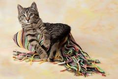 Gestreiftes Kätzchen, das auf einem bunten Schal liegt Lizenzfreie Stockbilder