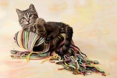 Gestreiftes Kätzchen, das auf einem gestreiften Schal liegt Stockfoto