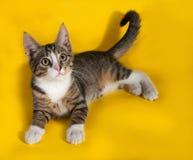 Gestreiftes Kätzchen, das auf Gelb liegt Lizenzfreie Stockfotos