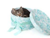 Gestreiftes Kätzchen, das heraus von der blauen Geschenkbox späht Lizenzfreie Stockfotos