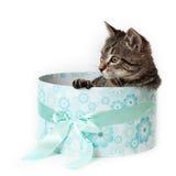 Gestreiftes Kätzchen, das heraus von der blauen Geschenkbox späht Stockfotos