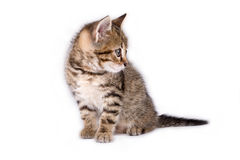 Gestreiftes Kätzchen, das sich hinlegt lizenzfreie stockbilder