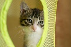 Gestreiftes Kätzchen, das traurig schaut Lizenzfreie Stockfotografie