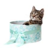 Gestreiftes Kätzchen in der blauen Geschenkbox Stockbilder