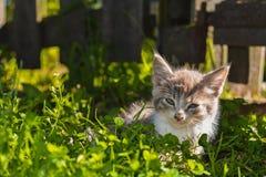 Gestreiftes Kätzchen in der Dorfstraßenkatze lizenzfreies stockfoto