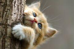 Gestreiftes Kätzchen des Ingwers, das oben einen Baumstamm klettert lizenzfreies stockbild