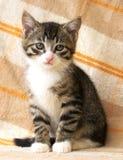 Gestreiftes Kätzchen mit traurigen Augen Lizenzfreies Stockfoto