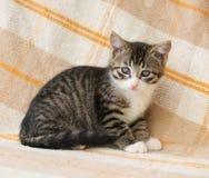 Gestreiftes Kätzchen mit traurigen Augen Stockfotografie