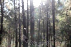 Gestricktes Spinnennetz morgens Lizenzfreies Stockbild