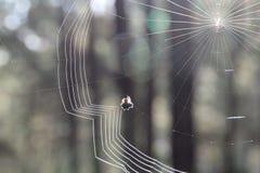Gestricktes Spinnennetz morgens Stockfotografie