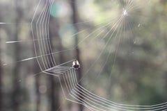 Gestricktes Spinnennetz morgens Stockfoto