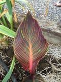 Gestript tropisch blad Stock Foto's