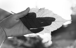 Gesture. hand depicting a dog on fallen leaf of a tree in the su Royalty Free Stock Image