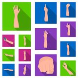 Gestures and their meaning flat icons in set collection for design.Emotional part of communication vector symbol stock. Illustration Stock Photo
