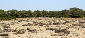 Gesturi: hoogland van Giara - Sardinige royalty-vrije stock afbeelding