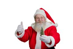 Gesturing Santa Claus on white background. Portrait of Santa Claus holding little decorative Christmas tree and giving thumb up, isolated on white background Stock Image
