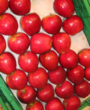 Gesunde Äpfel stockfotos