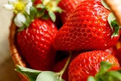 Gesunde Erdbeeren schließen oben Stockfoto