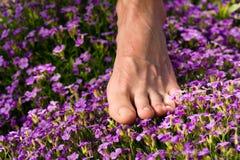 Gesunde Füße: Füße und Blumen Stockfoto