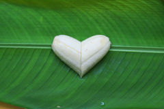 Gesunde Liebe Lizenzfreies Stockfoto