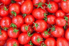 Gesunde Nahrung, Hintergrund. Tomate Stockfotografie