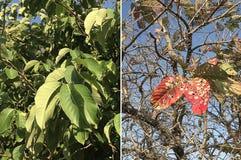 Gesunde und geplagte Bäume Lizenzfreies Stockbild