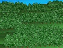 Gesunde Waldabbildung Stockfoto