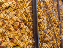 Gesunder ökologischer Mais auf einem weißen Hintergrund Stockbilder