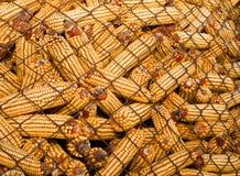 Gesunder ökologischer Mais auf einem weißen Hintergrund Stockfoto