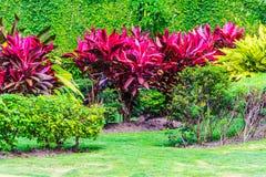 Gesunder Garten Lizenzfreie Stockbilder