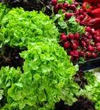 Gesunder grüner Salat und rote Rettiche Stockfotos