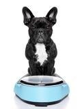 Gesunder Hund Lizenzfreie Stockfotografie
