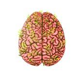 Gesunder intelligenter menschlicher wachsender Brain Green Eco Floral Design vektor abbildung