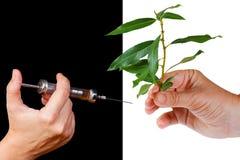 Gesunder Lebensstil - Alternative zu den Drogen Stockbilder