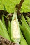 Gesunder Mais Lizenzfreies Stockbild